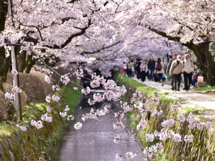 Mar 16-25, Kyoto