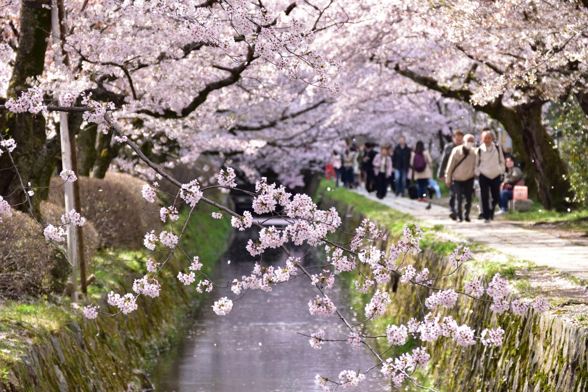 Philosoper's Walk Kyoto