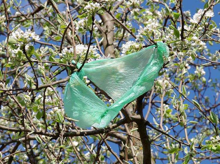 Uma cidade sem sacos de plástico