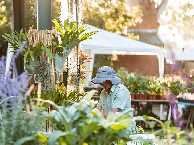 Collectors' Plant Fair