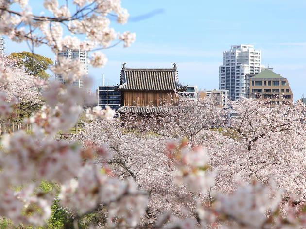 Fukuoka sakura