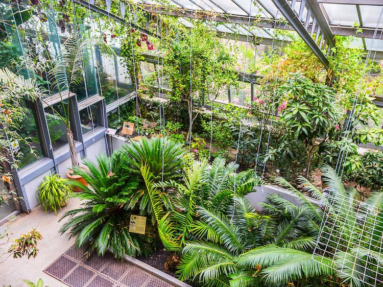 Palacio de Cristal de Arganzuela greenhouse