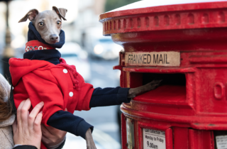 London Dog Week