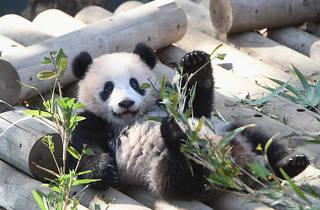 エア動物園に行こう! 休園する上野動物公園のTwitterが話題