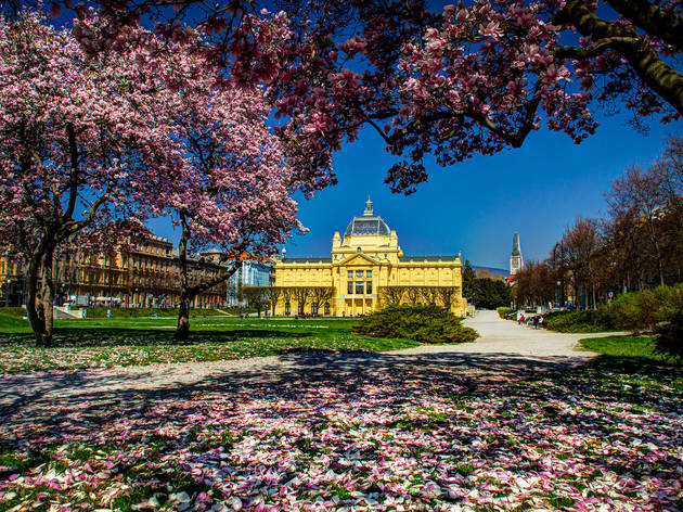 Cherry blossoms at King Tomislav Square in Zagreb