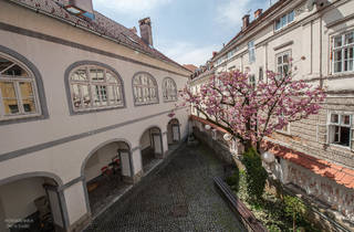 Cherry blossoms in the Karlovac City Museum's courtyard