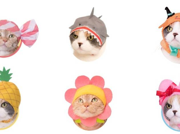 These are the cutest and weirdest Japanese pet products