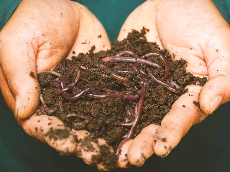 If possible, compost