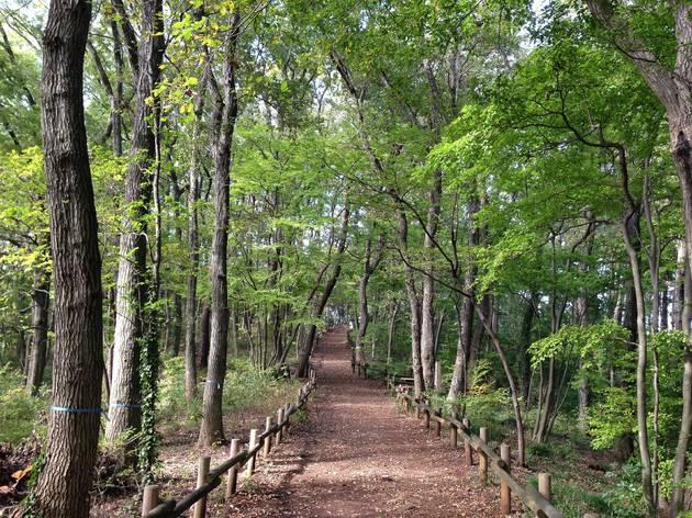 Sayama Hills
