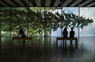 Among the trees at Hayward Gallery