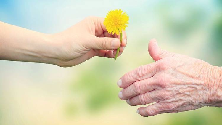 Young hand, flower and old hand