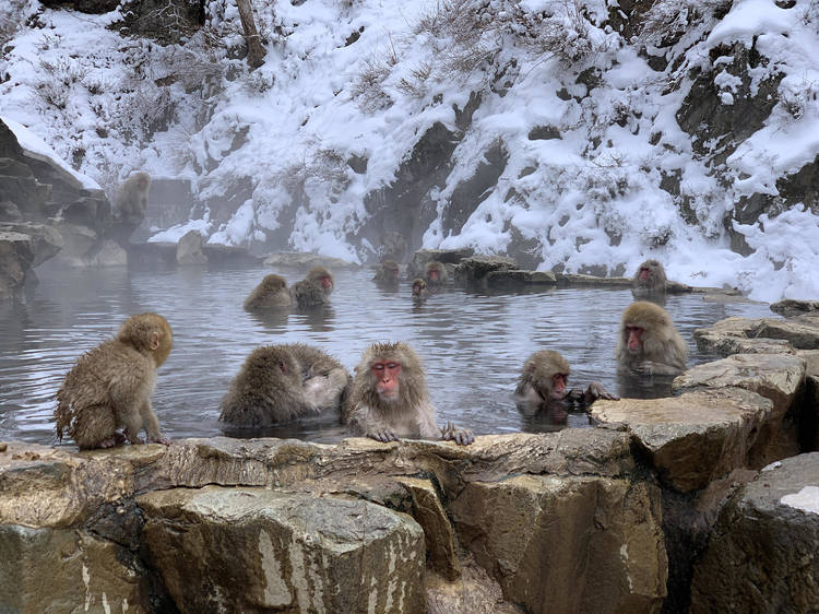 Jigokudani Monkey Park, Nagano