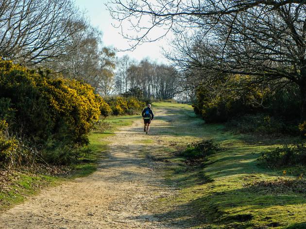 Headley Heath in Surrey