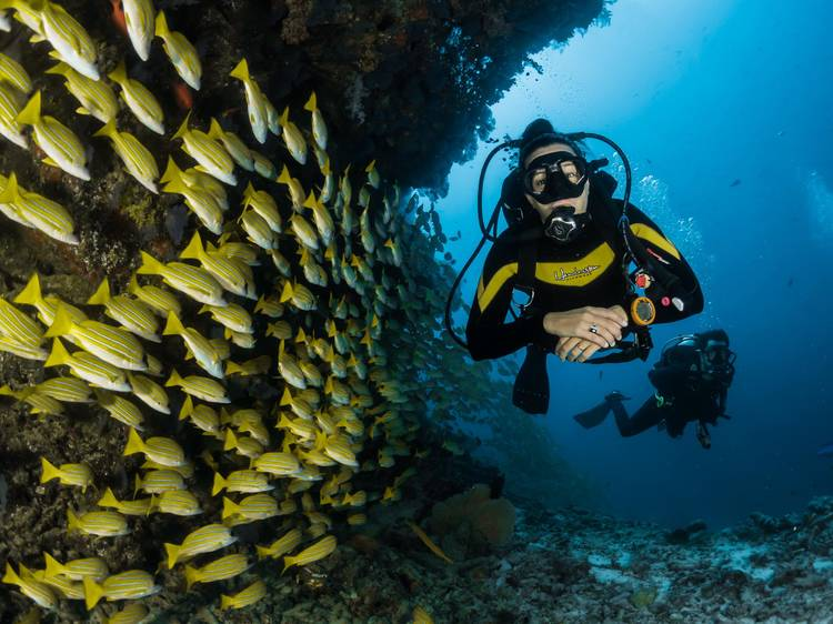Try your hand at scuba diving