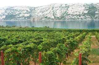 Partake in a grape harvest by the sea