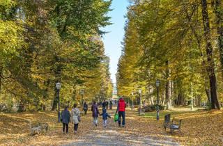 Stroll through a public park