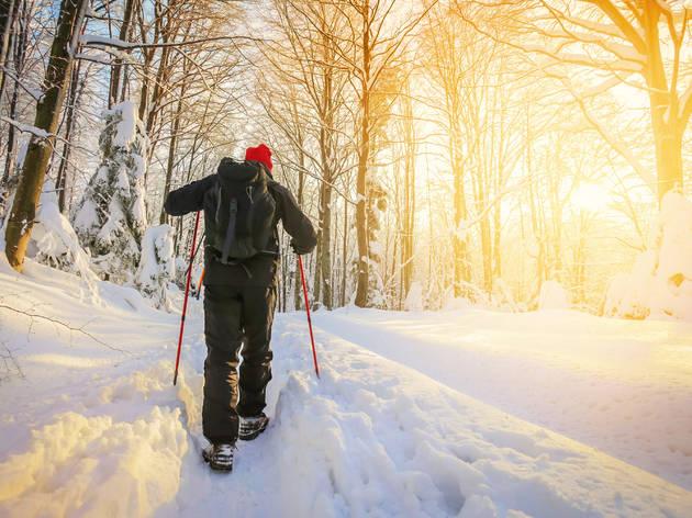 Trek through a snowy forest