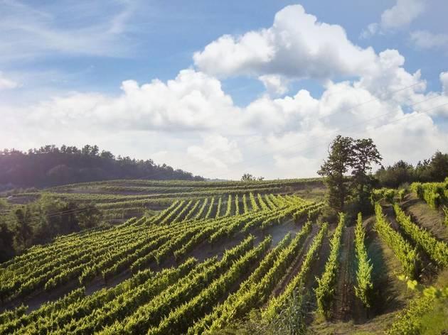 Go grape harvesting inland