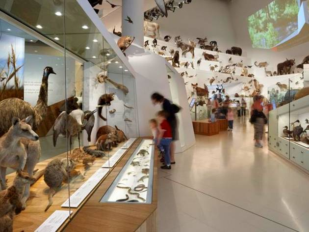 People exploring a gallery at Melbourne Museum filled with taxidermy animals