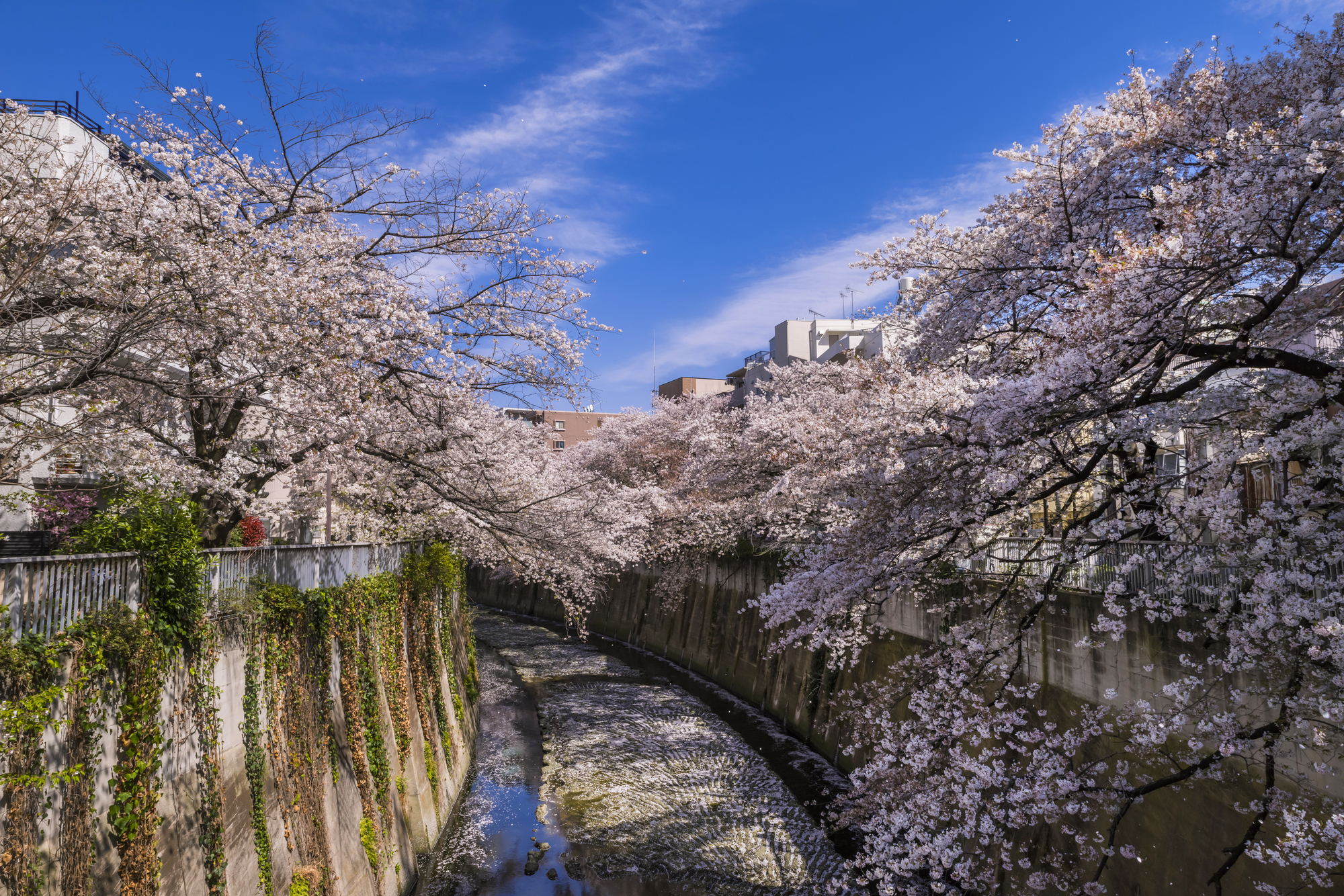 These Are The Least Crowded Places In Tokyo For Cherry Blossoms