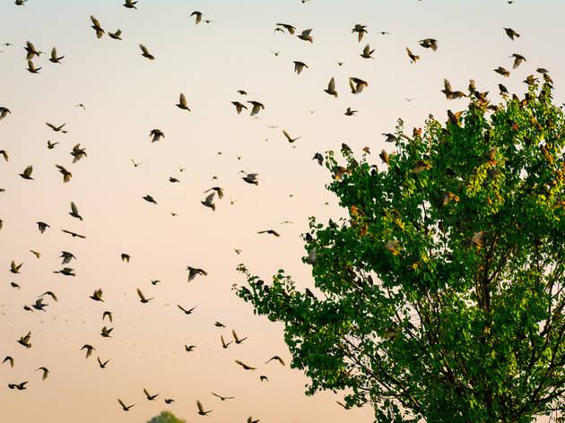Birds flying around a tree