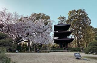 Hotel Chinzanso sakura