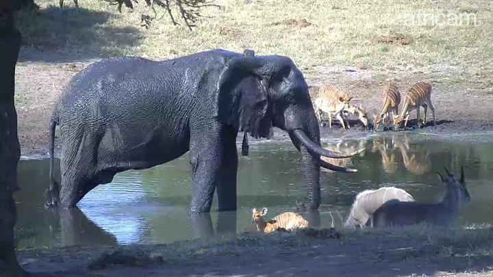 screenshot from africam.com live stream of Tembe Elephant Reserve