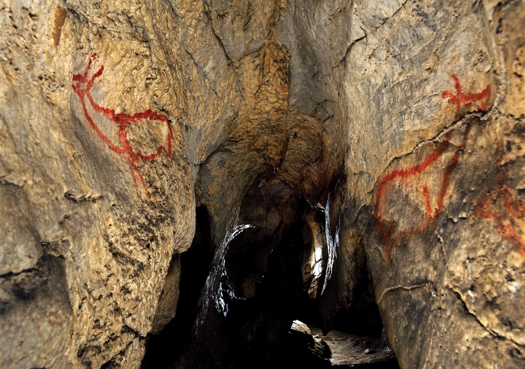 Cueva de Covalanas Cantabria