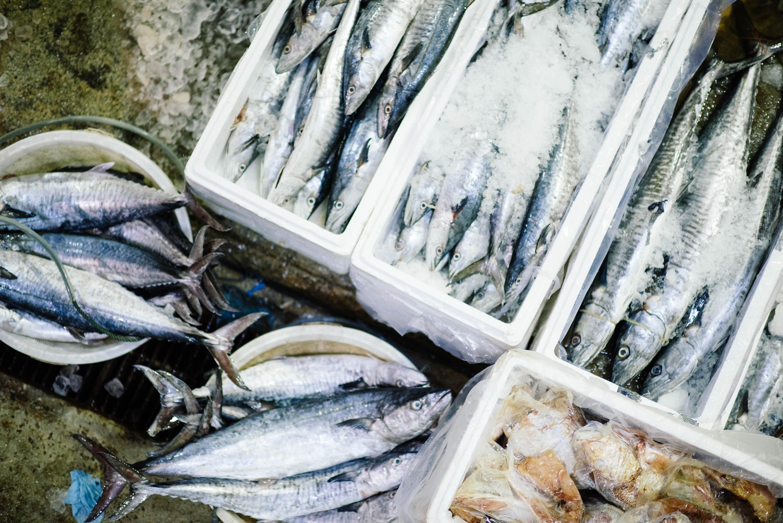 peixe, peixe fresco