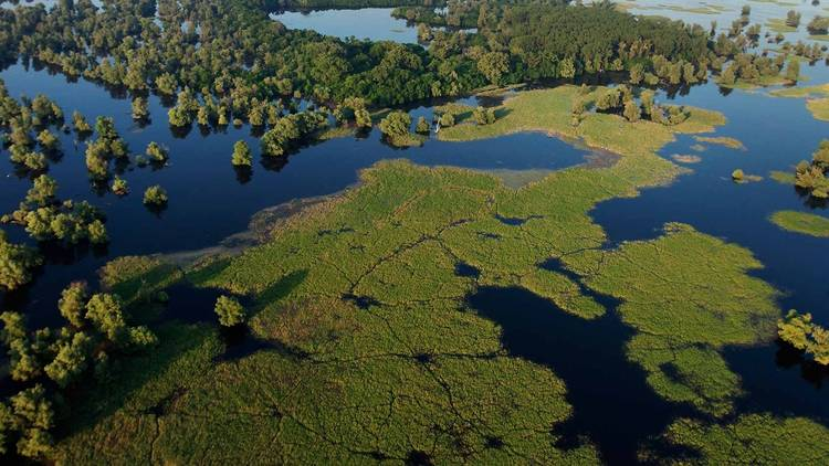 Ponds and swamps of the Kopački Rit Nature Park in Slavonia
