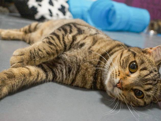 This Melbourne Animal Shelter Is Running Virtual Storytime For Kids At Home