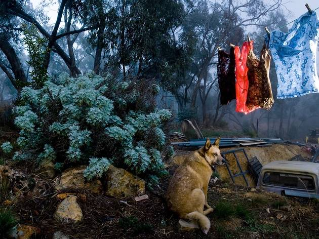 A photograph of a dog in the bush under a washing line