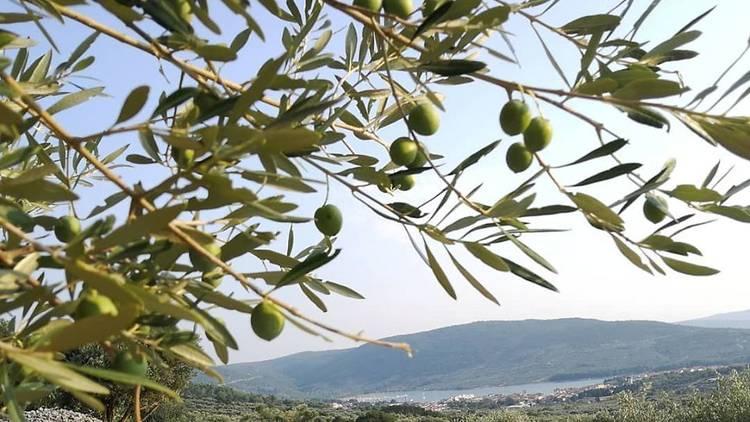 Cres olives
