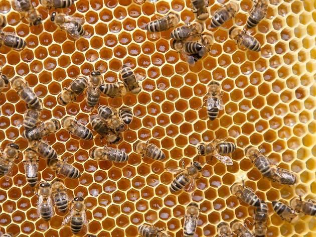 Slavonian honey (Slavonski med)