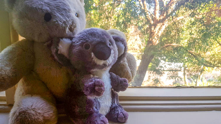 Two teddies in a window