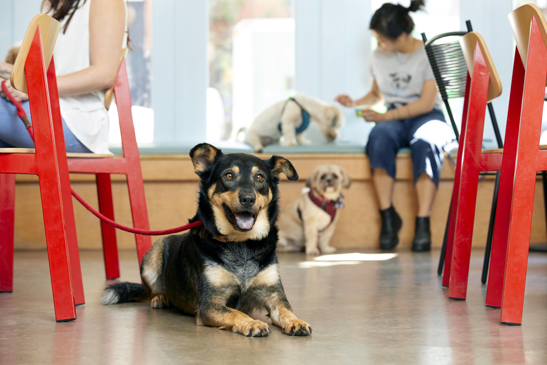 Coronavirus: recomendaciones y cuidados para perros