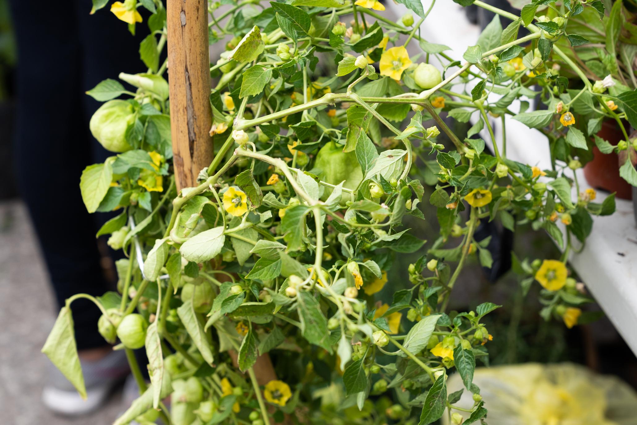 mercado de tlalpal hortaliza