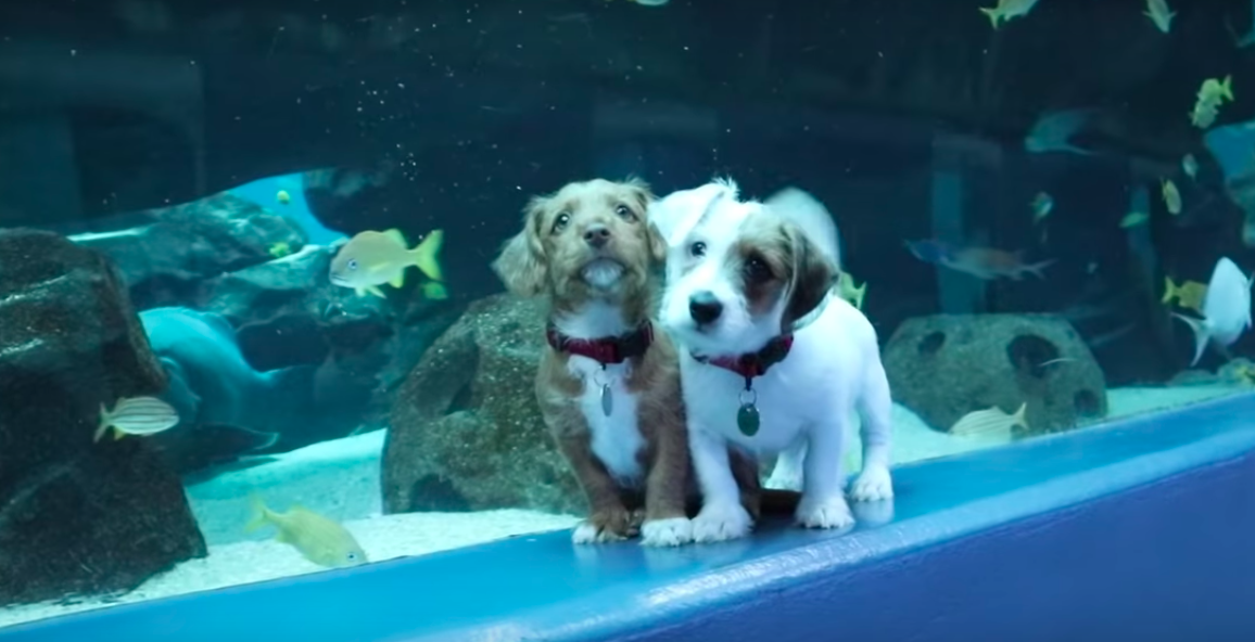 Two puppies got to run free in a closed aquarium