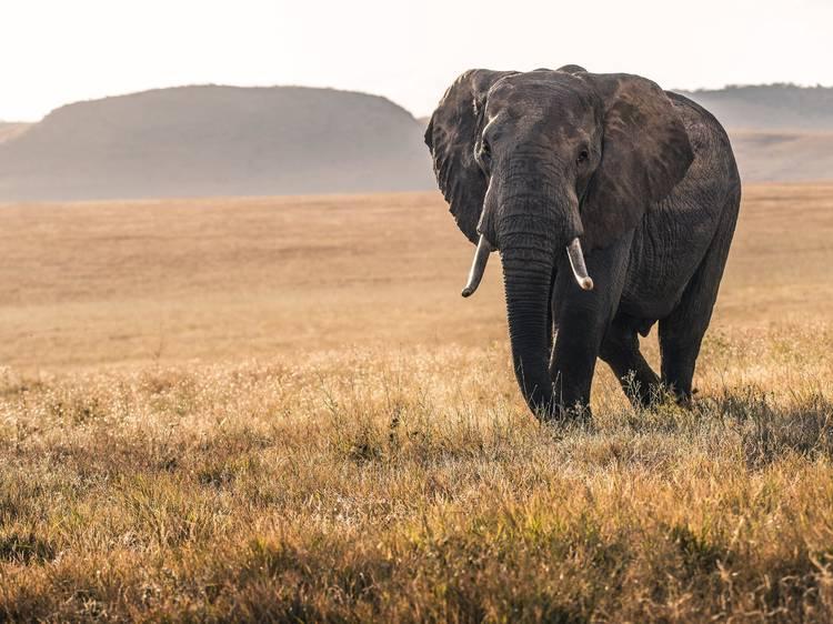 Dia 29: Levá-los num safari virtual