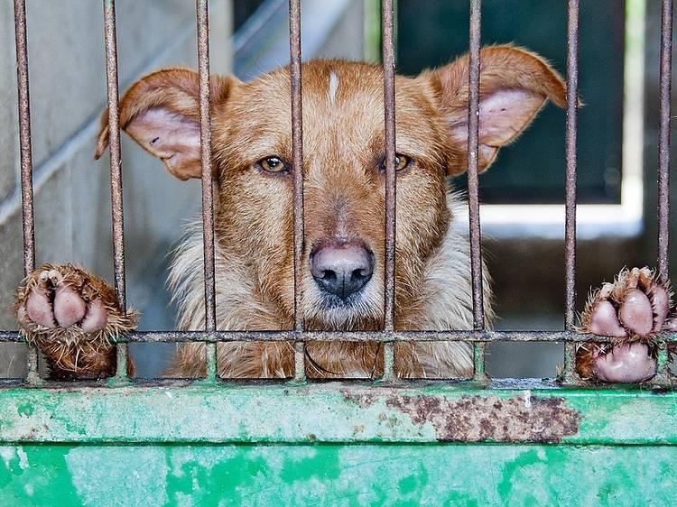 Como ajudar associações de animais em tempo de pandemia