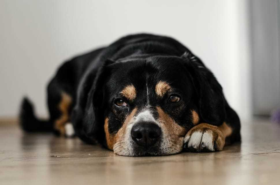 Os cães e gatos da Associação Midas precisam de ajuda