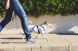 Pasear al perro