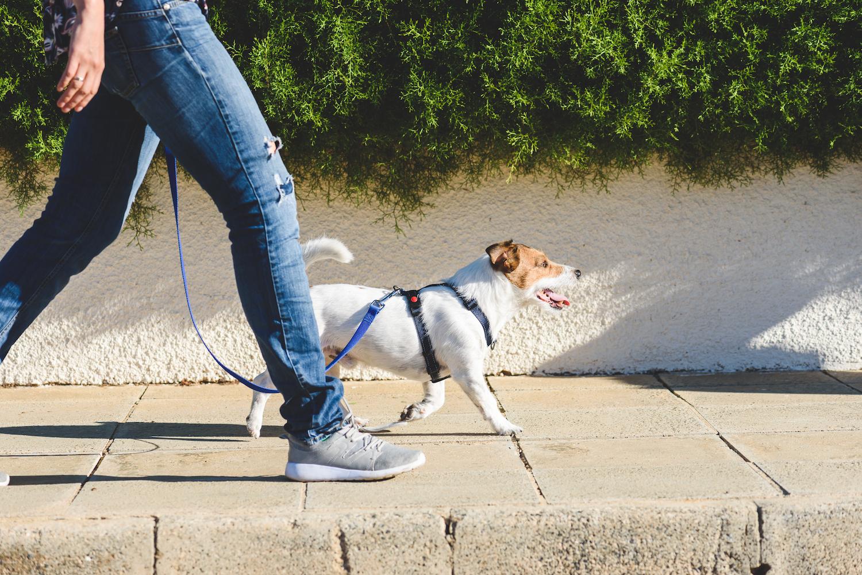 Cinco consejos para pasear al perro en tiempos de confinamiento