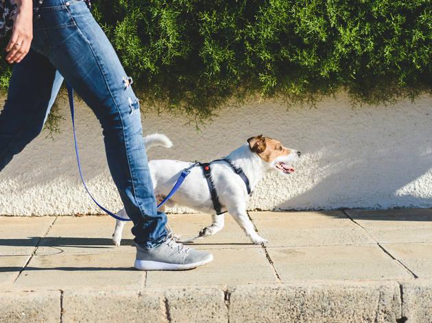 Passejant al gos
