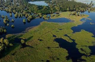 The water lilies and reeds of Kopački Rit in eastern Croatia