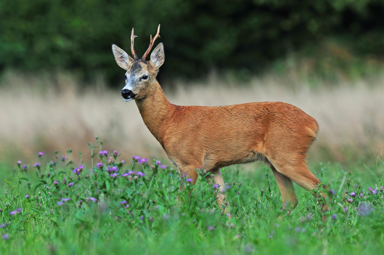 54 photos of Croatia's fantastic flora and fauna
