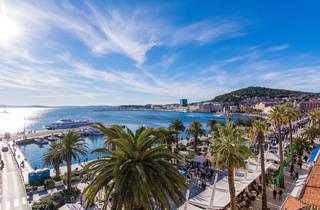 Dalmatia's widespread European fan palms adorning Split's riviera