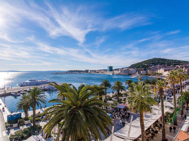 Dalmatia's widespread European fan palms adorning Split's riviera