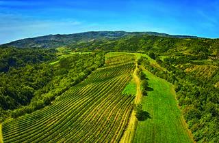 Grapevines are strewn all across Croatia