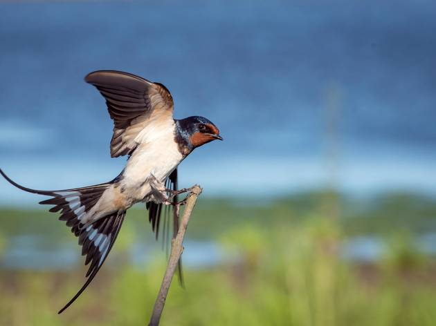 A swallow taking in the scenic view